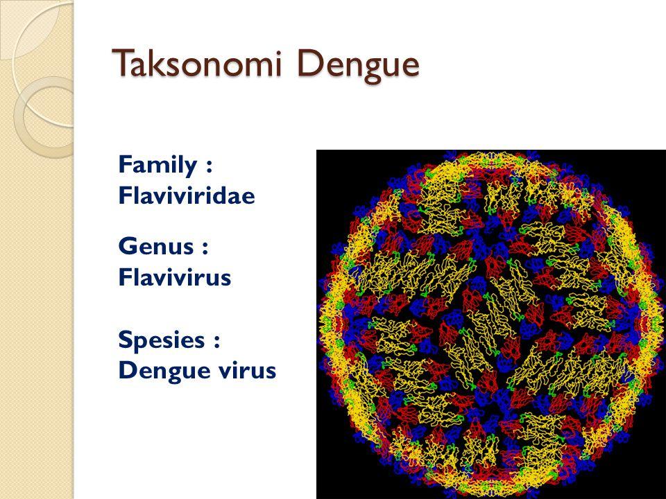 Taksonomi Dengue Family : Flaviviridae Genus : Flavivirus Spesies : Dengue virus