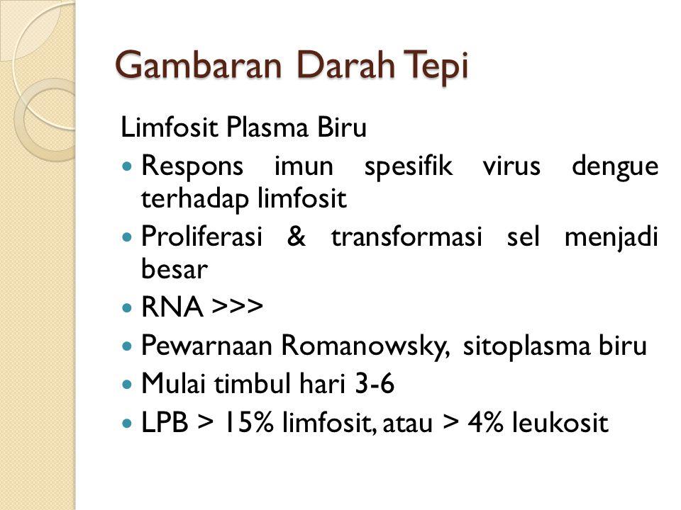 Gambaran Darah Tepi Limfosit Plasma Biru Respons imun spesifik virus dengue terhadap limfosit Proliferasi & transformasi sel menjadi besar RNA >>> Pewarnaan Romanowsky, sitoplasma biru Mulai timbul hari 3-6 LPB > 15% limfosit, atau > 4% leukosit