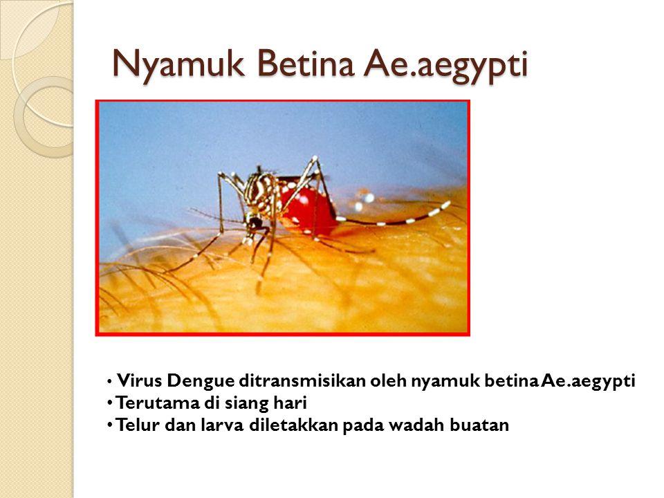 Nyamuk Betina Ae.aegypti Virus Dengue ditransmisikan oleh nyamuk betina Ae.aegypti Terutama di siang hari Telur dan larva diletakkan pada wadah buatan
