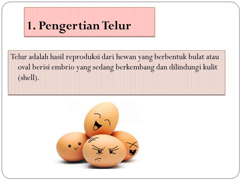 1. Pengertian Telur Telur adalah hasil reproduksi dari hewan yang berbentuk bulat atau oval berisi embrio yang sedang berkembang dan dilindungi kulit