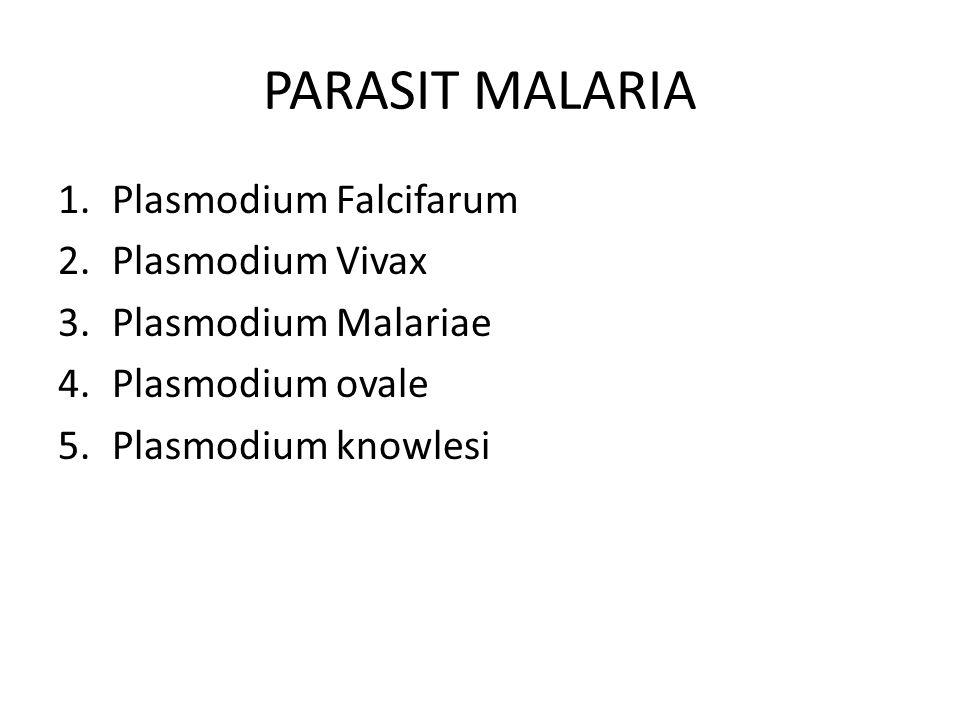 PARASIT MALARIA 1.Plasmodium Falcifarum 2.Plasmodium Vivax 3.Plasmodium Malariae 4.Plasmodium ovale 5.Plasmodium knowlesi
