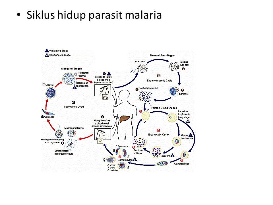 Sel darah merah yang terinfeksi malaria