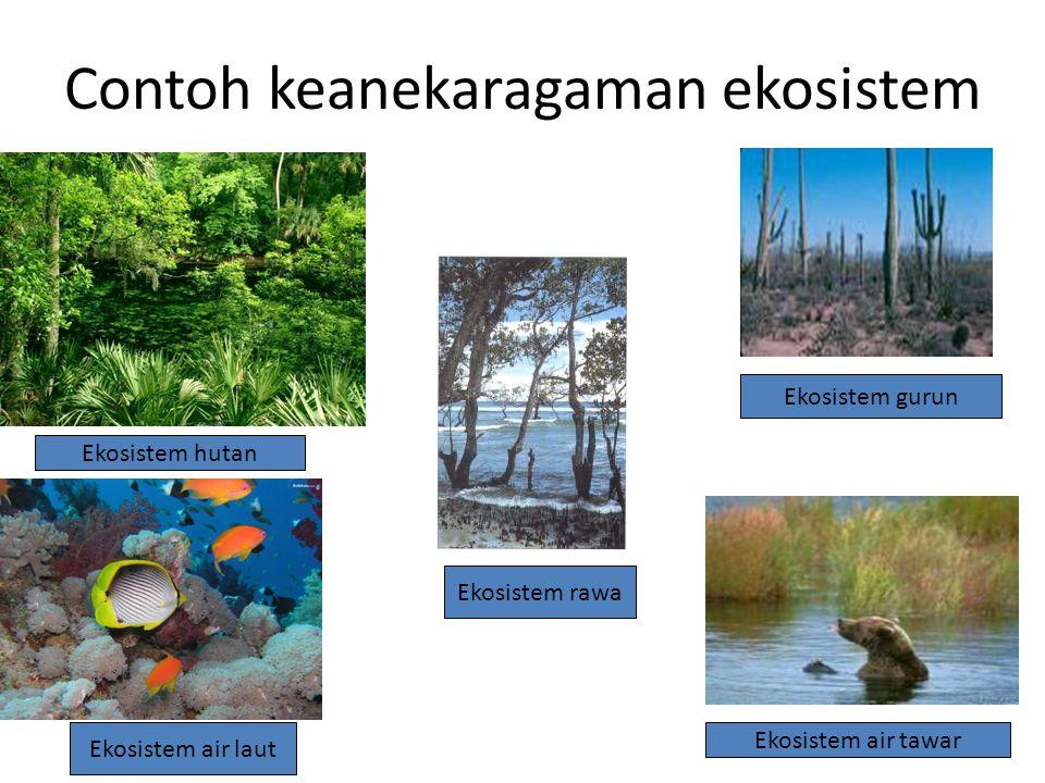 INDONESIA MASUK KATEGORI NEGARA MEGABIODIVERSITAS
