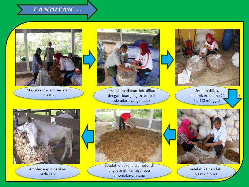 CARA PEMBUATAN AMOFER Kumpulkan jerami padi ditempat yang kering Timbang jerami padi Timbang urea dan starbio Siram jerami dengan air dengan tingkat k