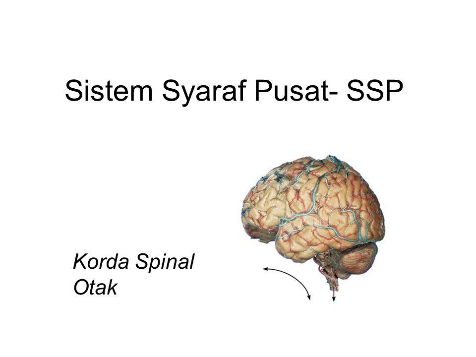 Substansi Putih Korda Spinal  Jaras Ascending : informasi sensori dengan rantai multi- neuron dari badan ke regio SSP lebih ke depan  Kolumna dorsal  Traktus spinotalamik  Traktus spinoserebellar  Jaras Descending : instruksi motor dari otak ke regio lebih kaudal SSP  Pyramidal (corticospinal)  Lainnya ( extrapyramidal )  Serabut kommissural : menyilang dari satu sisi ke sisi seberangnya  Kebanyakan jaras menyilang (atau dekusasi) pada tempat tertentu  Kebanyakan neuron mengalami pergantian sinap dua atau tigakali sepanjang perjalanan fungsinya, misal dalam batang otak, talamus atau lainnya