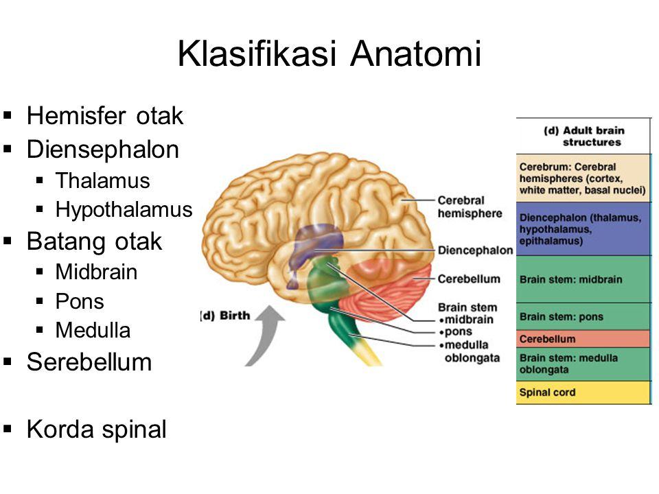 Klasifikasi Anatomi  Hemisfer otak  Diensephalon  Thalamus  Hypothalamus  Batang otak  Midbrain  Pons  Medulla  Serebellum  Korda spinal