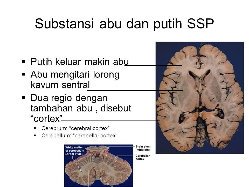 Substansi abu dan putih SSP  Putih keluar makin abu  Abu mengitari lorong kavum sentral  Dua regio dengan tambahan abu, disebut cortex  Cerebrum: cerebral cortex  Cerebellum: cerebellar cortex _________________ ____________________________ _____________________________