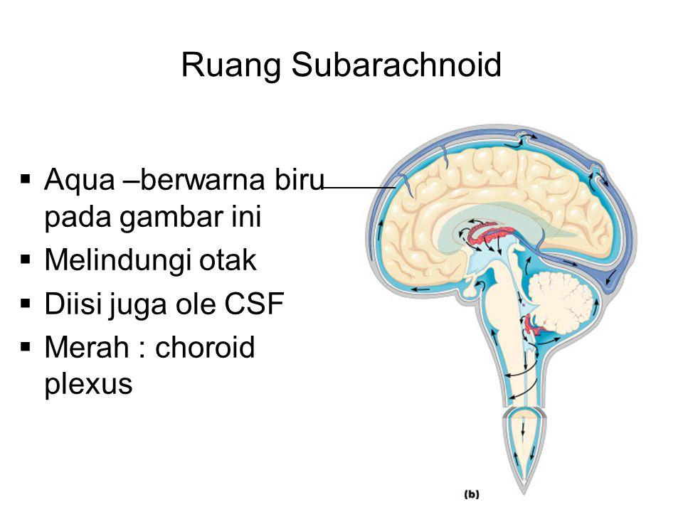 Ruang Subarachnoid  Aqua –berwarna biru pada gambar ini  Melindungi otak  Diisi juga ole CSF  Merah : choroid plexus ________