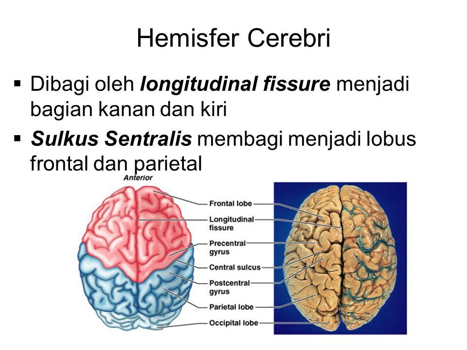Hemisfer Cerebri  Dibagi oleh longitudinal fissure menjadi bagian kanan dan kiri  Sulkus Sentralis membagi menjadi lobus frontal dan parietal