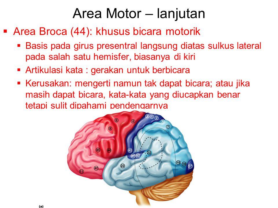 Area Motor – lanjutan  Area Broca (44): khusus bicara motorik  Basis pada girus presentral langsung diatas sulkus lateral pada salah satu hemisfer, biasanya di kiri  Artikulasi kata : gerakan untuk berbicara  Kerusakan: mengerti namun tak dapat bicara; atau jika masih dapat bicara, kata-kata yang diucapkan benar tetapi sulit dipahami pendengarnya