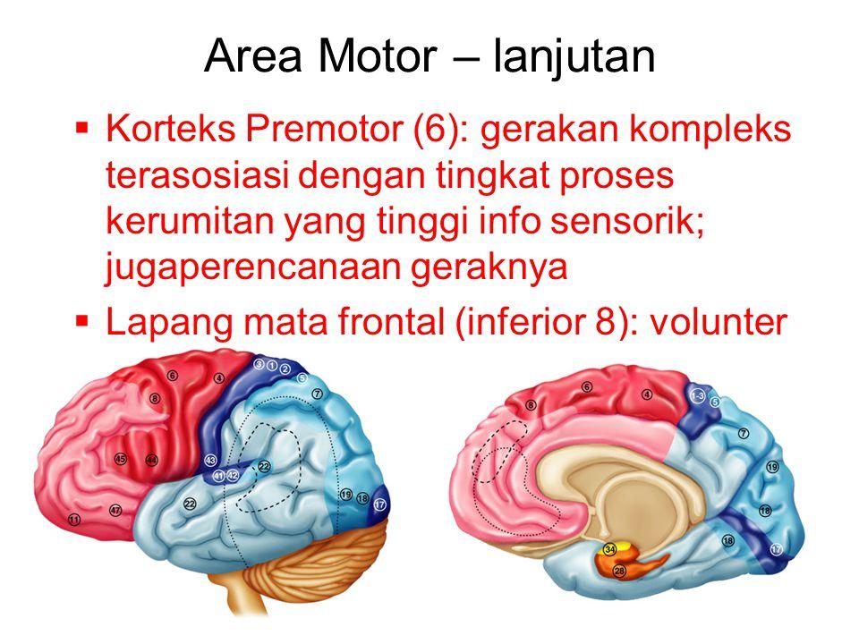 Area Motor – lanjutan  Korteks Premotor (6): gerakan kompleks terasosiasi dengan tingkat proses kerumitan yang tinggi info sensorik; jugaperencanaan geraknya  Lapang mata frontal (inferior 8): volunter movements of eyes