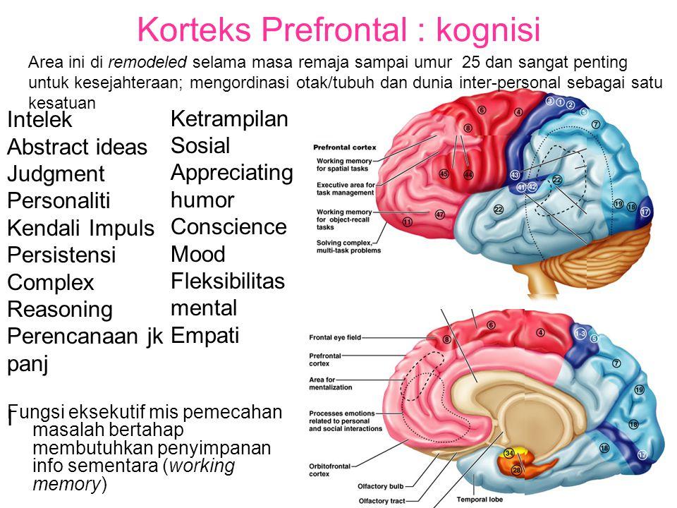 Korteks Prefrontal : kognisi Fungsi eksekutif mis pemecahan masalah bertahap membutuhkan penyimpanan info sementara (working memory) Area ini di remodeled selama masa remaja sampai umur 25 dan sangat penting untuk kesejahteraan; mengordinasi otak/tubuh dan dunia inter-personal sebagai satu kesatuan Ketrampilan Sosial Appreciating humor Conscience Mood Fleksibilitas mental Empati Intelek Abstract ideas Judgment Personaliti Kendali Impuls Persistensi Complex Reasoning Perencanaan jk panj I