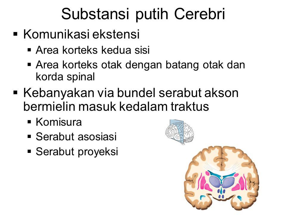 Substansi putih Cerebri  Komunikasi ekstensi  Area korteks kedua sisi  Area korteks otak dengan batang otak dan korda spinal  Kebanyakan via bundel serabut akson bermielin masuk kedalam traktus  Komisura  Serabut asosiasi  Serabut proyeksi