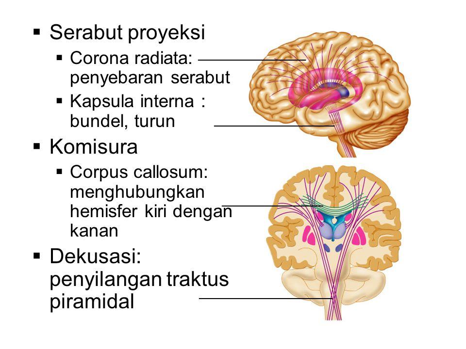 Serabut proyeksi  Corona radiata: penyebaran serabut  Kapsula interna : bundel, turun  Komisura  Corpus callosum: menghubungkan hemisfer kiri de