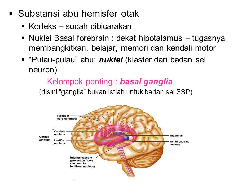  Substansi abu hemisfer otak  Korteks – sudah dibicarakan  Nuklei Basal forebrain : dekat hipotalamus – tugasnya membangkitkan, belajar, memori dan kendali motor  Pulau-pulau abu: nuklei (klaster dari badan sel neuron) Kelompok penting : basal ganglia (disini ganglia bukan istiah untuk badan sel SSP)