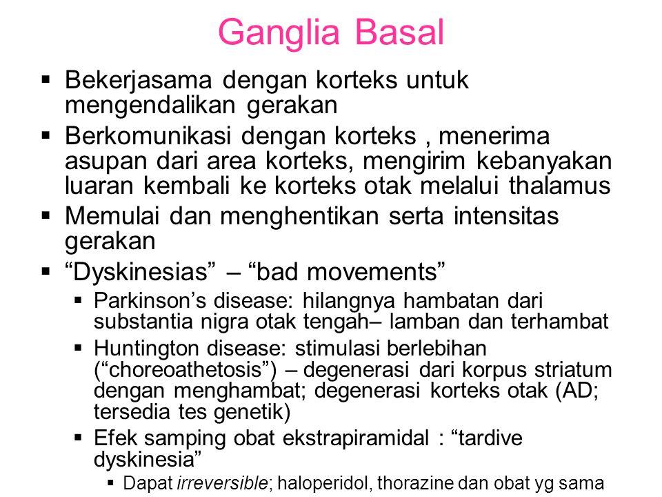 Ganglia Basal  Bekerjasama dengan korteks untuk mengendalikan gerakan  Berkomunikasi dengan korteks, menerima asupan dari area korteks, mengirim kebanyakan luaran kembali ke korteks otak melalui thalamus  Memulai dan menghentikan serta intensitas gerakan  Dyskinesias – bad movements  Parkinson's disease: hilangnya hambatan dari substantia nigra otak tengah– lamban dan terhambat  Huntington disease: stimulasi berlebihan ( choreoathetosis ) – degenerasi dari korpus striatum dengan menghambat; degenerasi korteks otak (AD; tersedia tes genetik)  Efek samping obat ekstrapiramidal : tardive dyskinesia  Dapat irreversible; haloperidol, thorazine dan obat yg sama