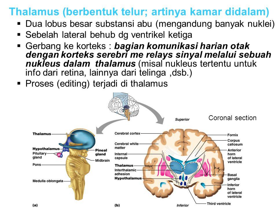 Thalamus (berbentuk telur; artinya kamar didalam)  Dua lobus besar substansi abu (mengandung banyak nuklei)  Sebelah lateral behub dg ventrikel ketiga  Gerbang ke korteks : bagian komunikasi harian otak dengan korteks serebri me relays sinyal melalui sebuah nukleus dalam thalamus (misal nukleus tertentu untuk info dari retina, lainnya dari telinga,dsb.)  Proses (editing) terjadi di thalamus Coronal section