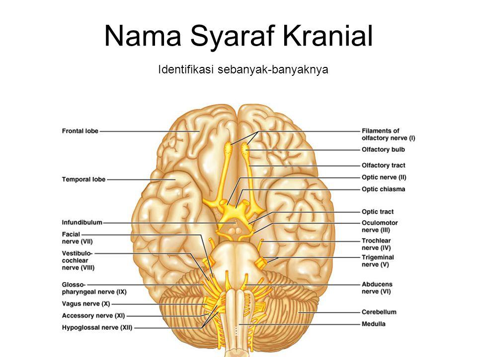 Nama Syaraf Kranial Identifikasi sebanyak-banyaknya
