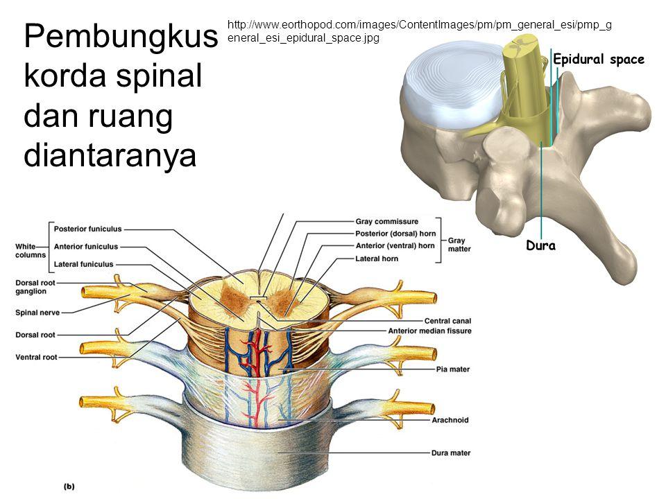 Bagian Otak Cerebrum Diencephalon Batang otak Serebellum