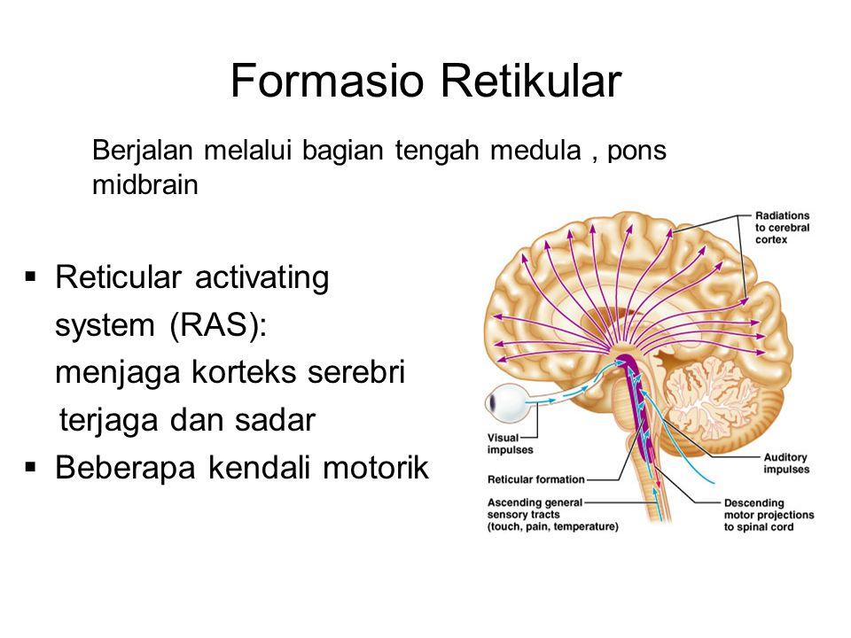 Formasio Retikular Berjalan melalui bagian tengah medula, pons midbrain  Reticular activating system (RAS): menjaga korteks serebri terjaga dan sadar
