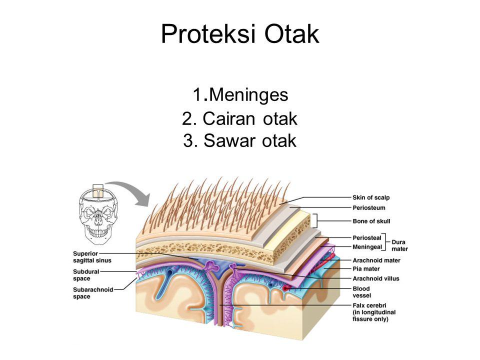 Proteksi Otak 1. Meninges 2. Cairan otak 3. Sawar otak