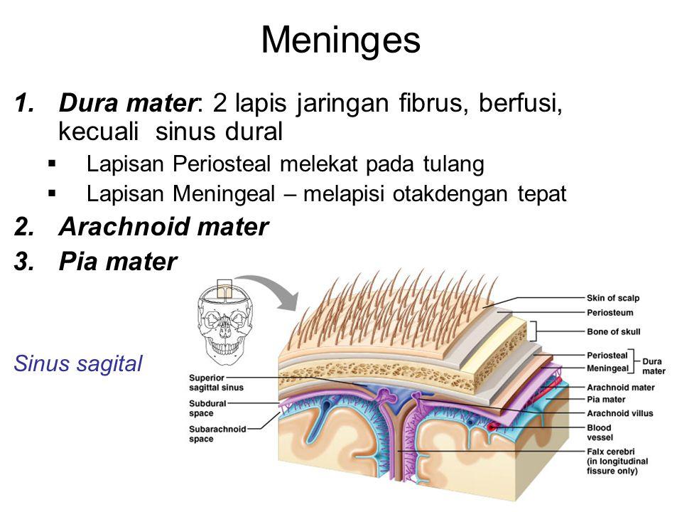 Meninges 1.Dura mater: 2 lapis jaringan fibrus, berfusi, kecuali sinus dural  Lapisan Periosteal melekat pada tulang  Lapisan Meningeal – melapisi otakdengan tepat 2.Arachnoid mater 3.Pia mater Sinus sagital