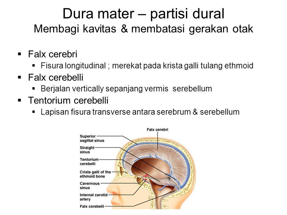 Dura mater – partisi dural Membagi kavitas & membatasi gerakan otak  Falx cerebri  Fisura longitudinal ; merekat pada krista galli tulang ethmoid 