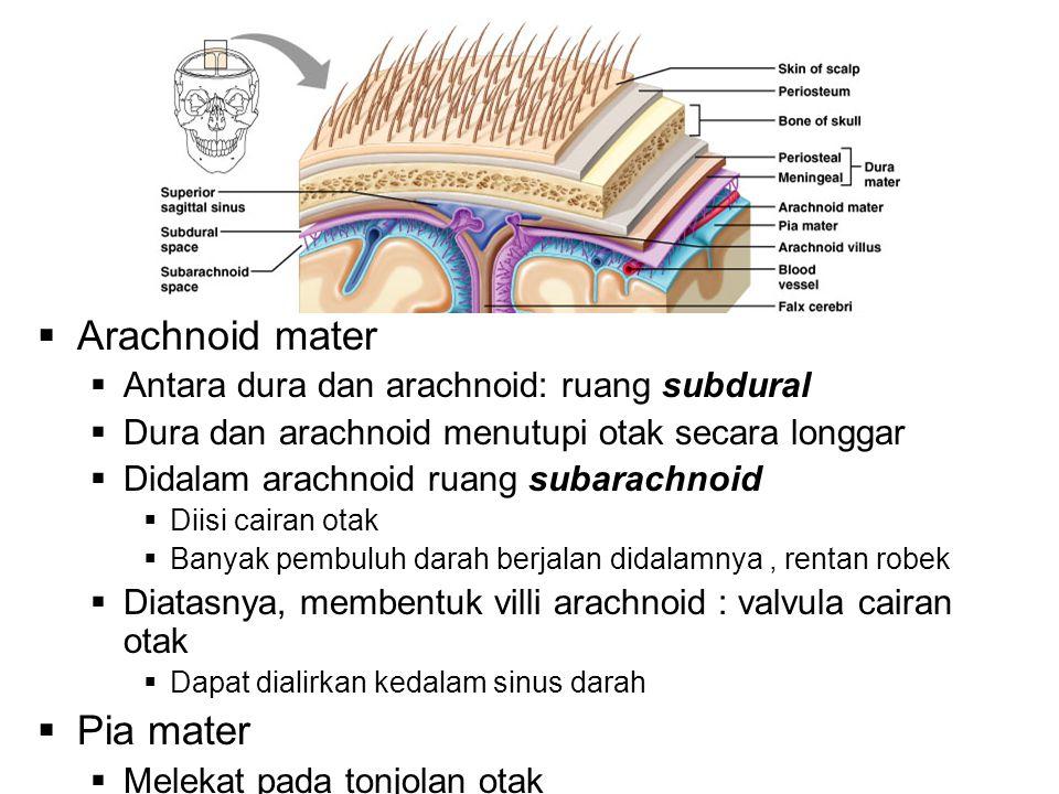  Arachnoid mater  Antara dura dan arachnoid: ruang subdural  Dura dan arachnoid menutupi otak secara longgar  Didalam arachnoid ruang subarachnoid  Diisi cairan otak  Banyak pembuluh darah berjalan didalamnya, rentan robek  Diatasnya, membentuk villi arachnoid : valvula cairan otak  Dapat dialirkan kedalam sinus darah  Pia mater  Melekat pada tonjolan otak