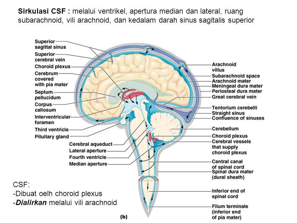Sirkulasi CSF : melalui ventrikel, apertura median dan lateral, ruang subarachnoid, vili arachnoid, dan kedalam darah sinus sagitalis superior CSF: -Dibuat oelh choroid plexus -Dialirkan melalui vili arachnoid