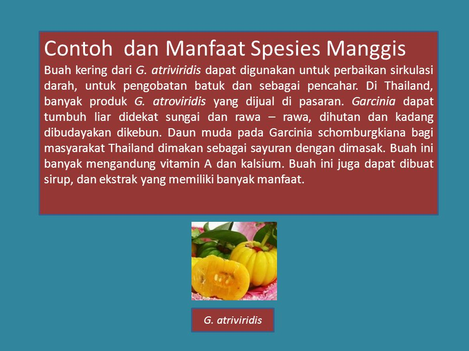Contoh dan Manfaat Spesies Manggis Buah kering dari G.