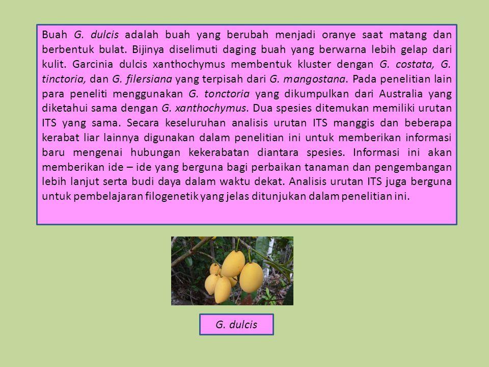 Buah G.dulcis adalah buah yang berubah menjadi oranye saat matang dan berbentuk bulat.