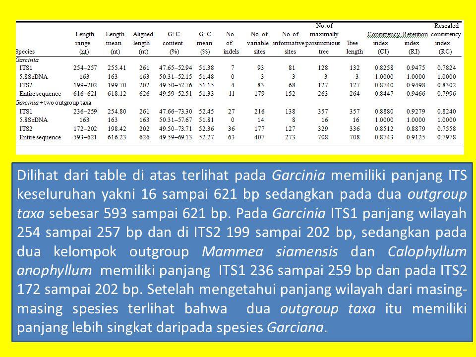 Dilihat dari table di atas terlihat pada Garcinia memiliki panjang ITS keseluruhan yakni 16 sampai 621 bp sedangkan pada dua outgroup taxa sebesar 593 sampai 621 bp.