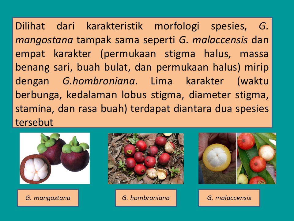 Dilihat dari karakteristik morfologi spesies, G.mangostana tampak sama seperti G.