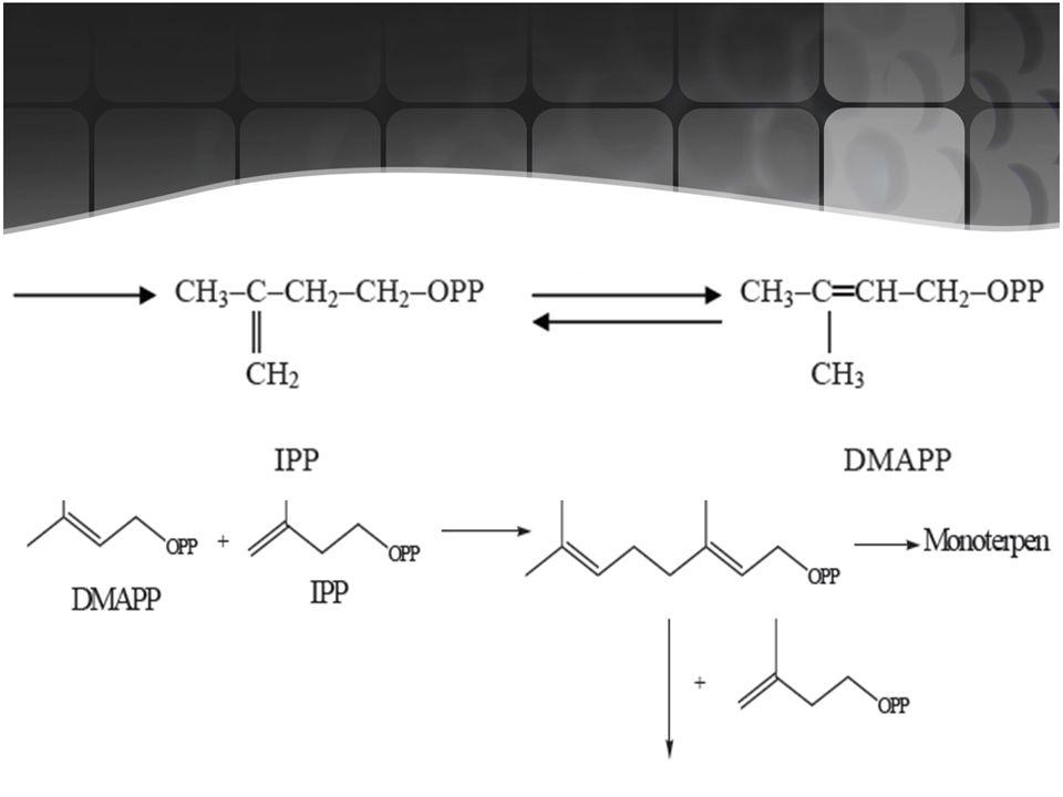 Mekanisme biosintesa senyawa terpenoid adalah sebagai berikut :
