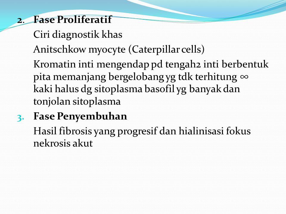 2. Fase Proliferatif Ciri diagnostik khas Anitschkow myocyte (Caterpillar cells) Kromatin inti mengendap pd tengah2 inti berbentuk pita memanjang berg