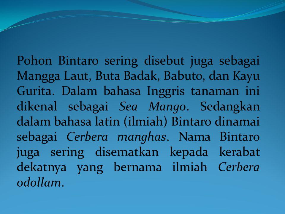 Pohon Bintaro sering disebut juga sebagai Mangga Laut, Buta Badak, Babuto, dan Kayu Gurita.