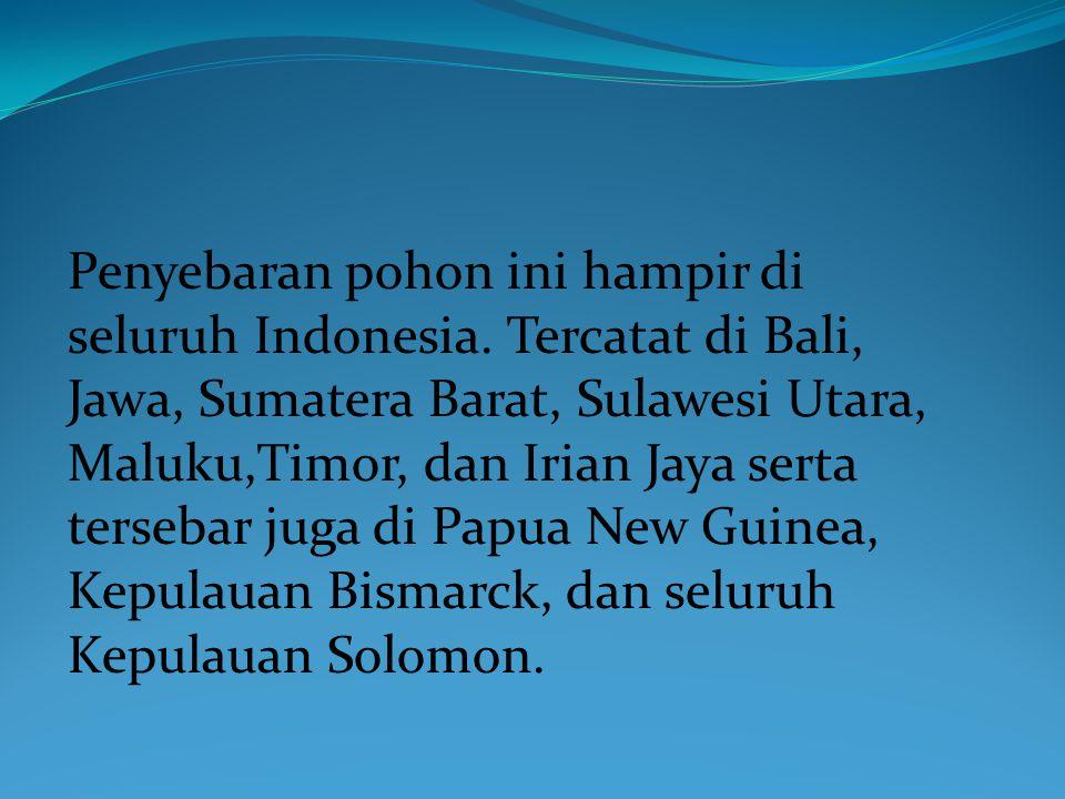 Penyebaran pohon ini hampir di seluruh Indonesia.