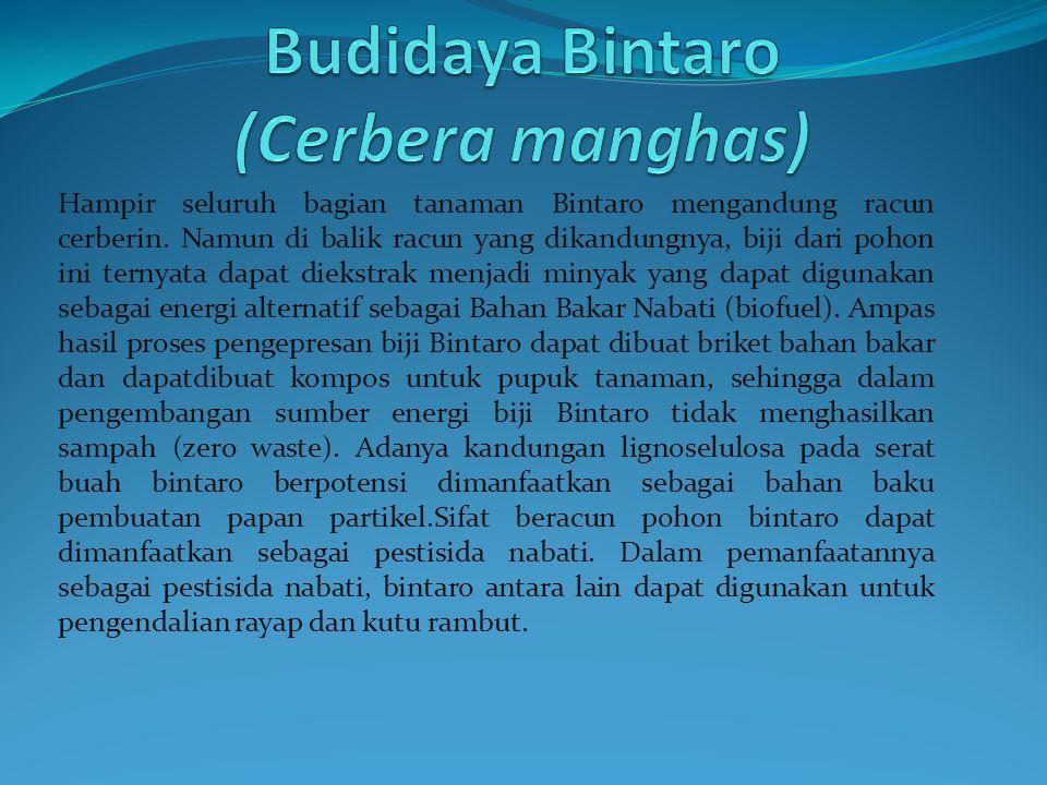 Hampir seluruh bagian tanaman Bintaro mengandung racun cerberin.