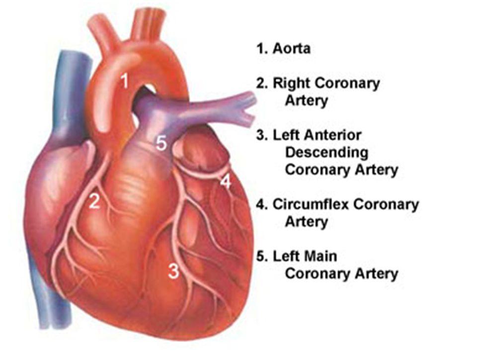 Manifestasi klinik Plak ateroma pada arteri koroner ↓ Stenosis arteri koroner ↓ Ketidakseimbangan antara kebutuhan dan penyediaan oksigen miokardial ↓ Iskemia miokardial ↓ Angina pektoris