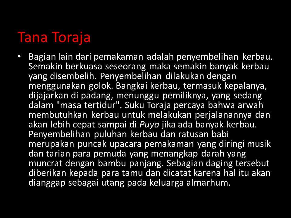 Tana Toraja Bagian lain dari pemakaman adalah penyembelihan kerbau.