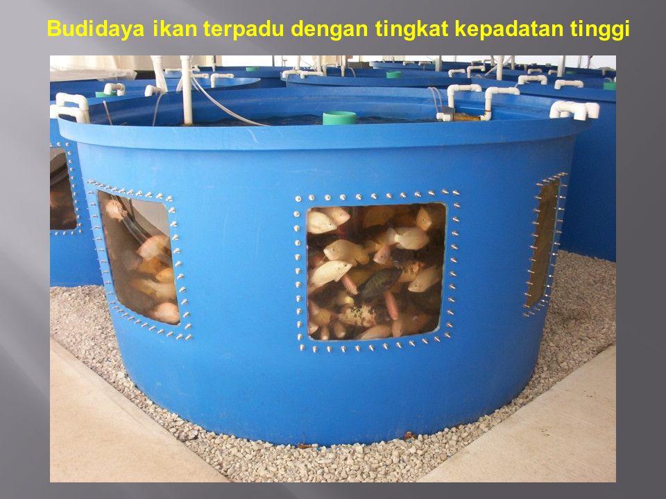 Budidaya ikan terpadu dengan tingkat kepadatan tinggi