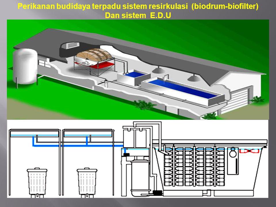 Perikanan budidaya terpadu sistem resirkulasi (biodrum-biofilter) Dan sistem E.D.U