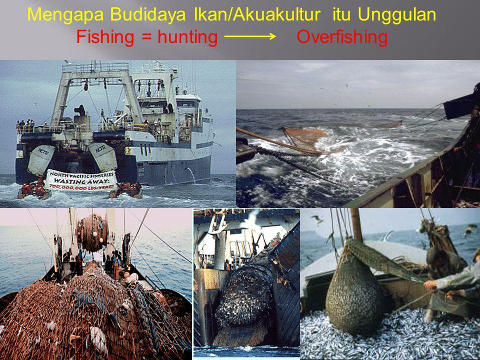 Mengapa Budidaya Ikan/Akuakultur itu Unggulan Fishing = hunting Overfishing
