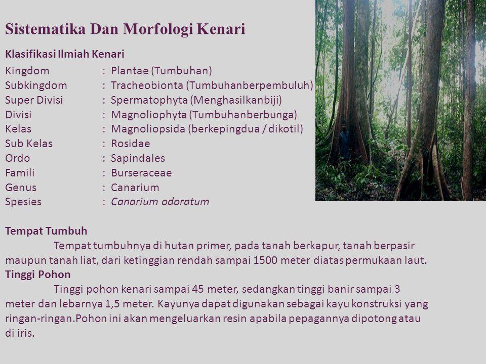 Sistematika Dan Morfologi Kenari Klasifikasi Ilmiah Kenari Kingdom: Plantae (Tumbuhan) Subkingdom: Tracheobionta (Tumbuhanberpembuluh) Super Divisi: S