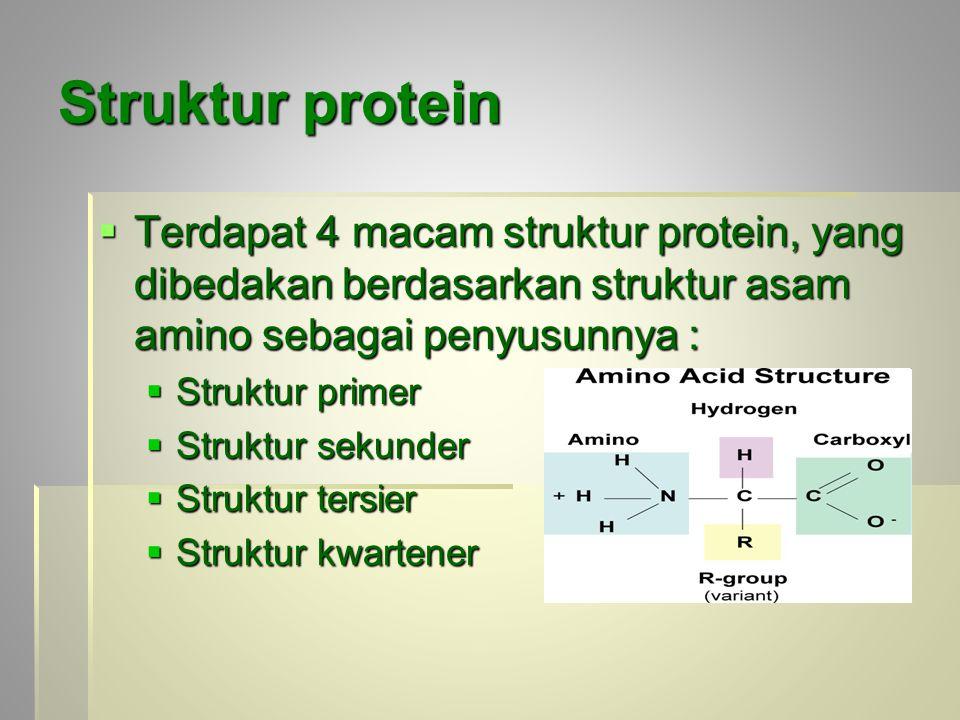 Struktur protein  Terdapat 4 macam struktur protein, yang dibedakan berdasarkan struktur asam amino sebagai penyusunnya :  Struktur primer  Struktu