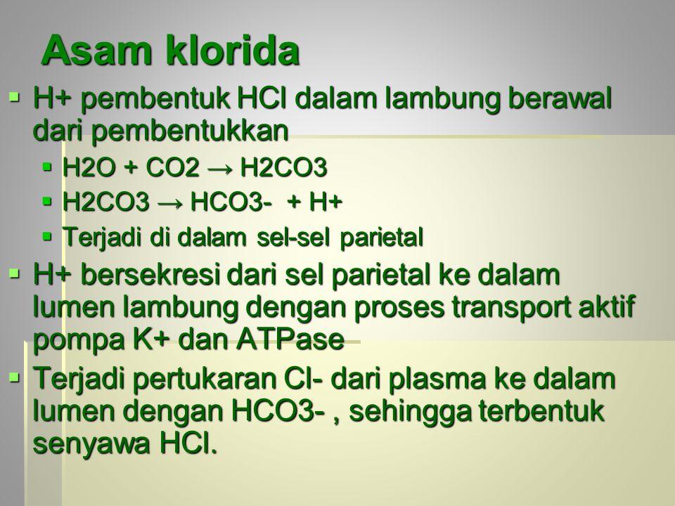 Asam klorida  H+ pembentuk HCl dalam lambung berawal dari pembentukkan  H2O + CO2 → H2CO3  H2CO3 → HCO3- + H+  Terjadi di dalam sel-sel parietal  H+ bersekresi dari sel parietal ke dalam lumen lambung dengan proses transport aktif pompa K+ dan ATPase  Terjadi pertukaran Cl- dari plasma ke dalam lumen dengan HCO3-, sehingga terbentuk senyawa HCl.