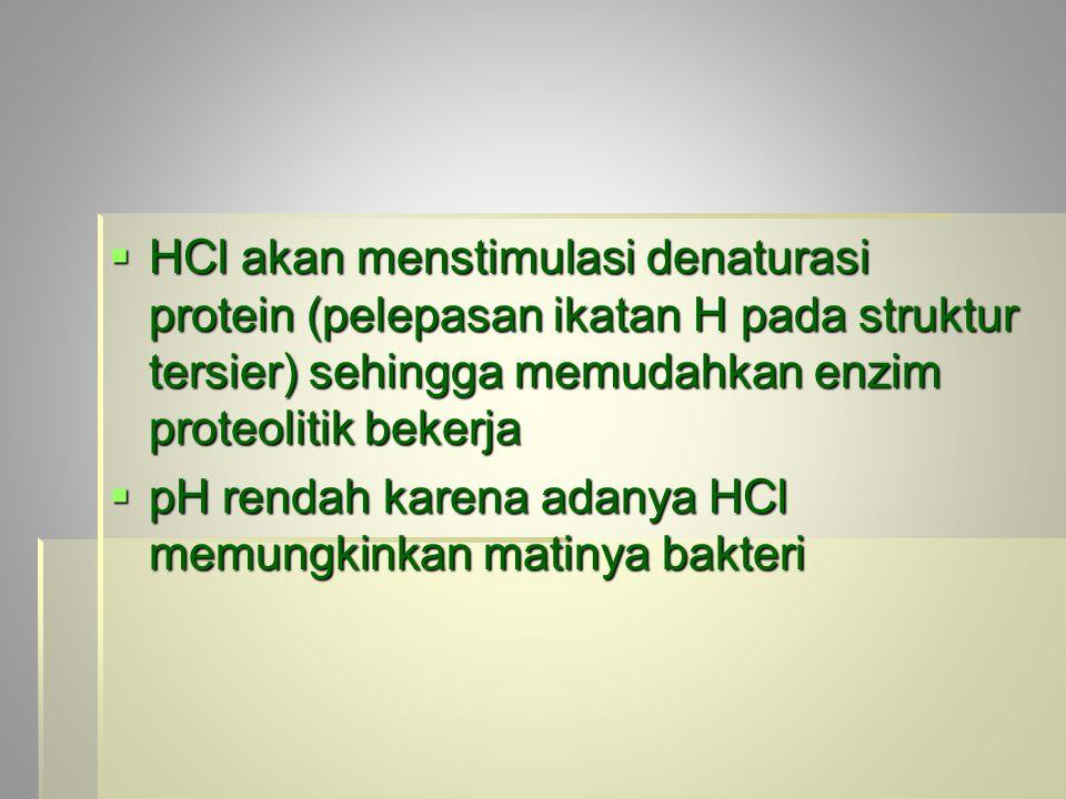  HCl akan menstimulasi denaturasi protein (pelepasan ikatan H pada struktur tersier) sehingga memudahkan enzim proteolitik bekerja  pH rendah karena adanya HCl memungkinkan matinya bakteri