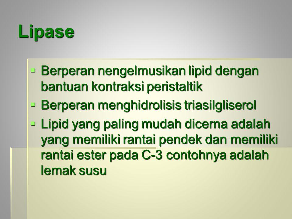 Lipase  Berperan nengelmusikan lipid dengan bantuan kontraksi peristaltik  Berperan menghidrolisis triasilgliserol  Lipid yang paling mudah dicerna adalah yang memiliki rantai pendek dan memiliki rantai ester pada C-3 contohnya adalah lemak susu