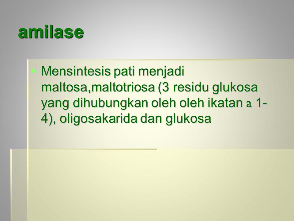 amilase  Mensintesis pati menjadi maltosa,maltotriosa (3 residu glukosa yang dihubungkan oleh oleh ikatan a 1- 4), oligosakarida dan glukosa