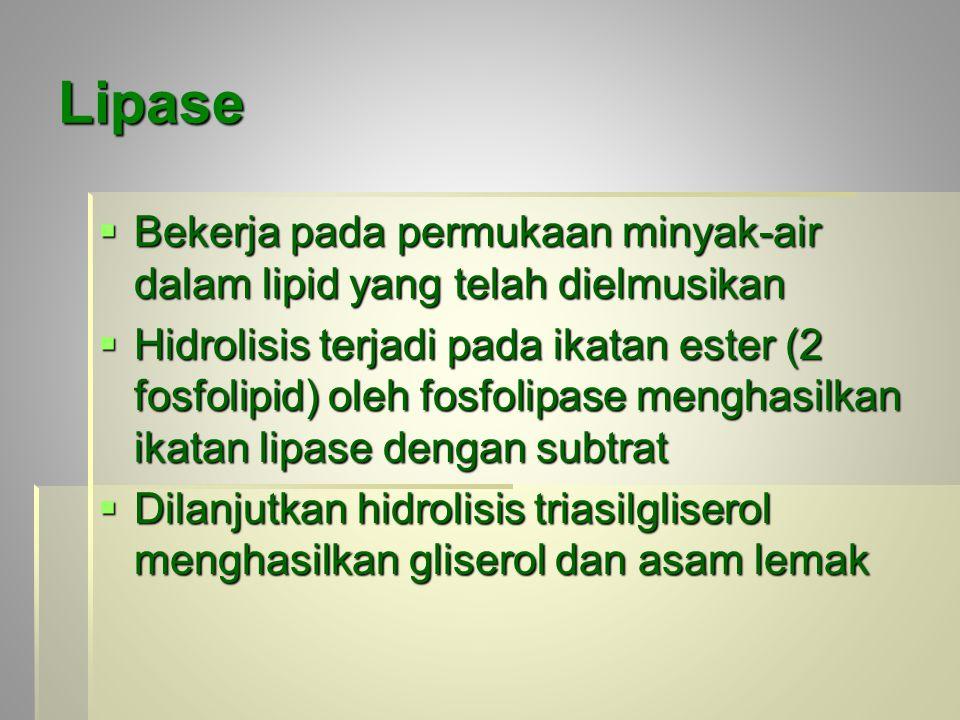 Lipase  Bekerja pada permukaan minyak-air dalam lipid yang telah dielmusikan  Hidrolisis terjadi pada ikatan ester (2 fosfolipid) oleh fosfolipase menghasilkan ikatan lipase dengan subtrat  Dilanjutkan hidrolisis triasilgliserol menghasilkan gliserol dan asam lemak